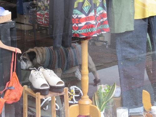 gastown boutique dog